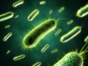 Toksyna bakteryjna może wyzwalać rozwój stwardnienia rozsianego?