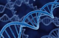 Zidentyfikowano nieprawidłowe geny odpowiedzialne za ryzyko SM